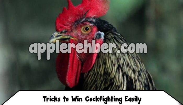 Tricks to Win Cockfighting Easily